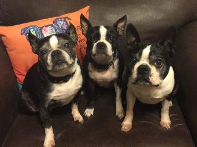 Gracie, Sassy, Howie